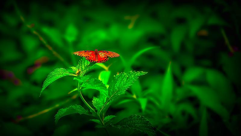 Butterfly-171.jpg