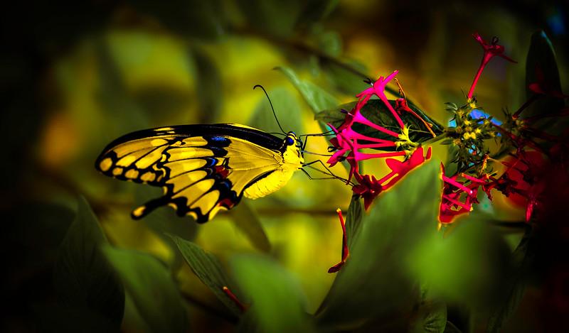Butterfly-145.jpg