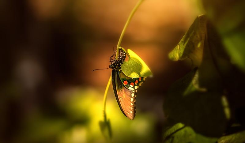 Butterfly-126.jpg