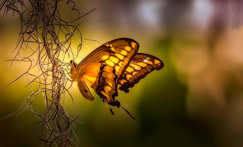 Butterflies-004.jpg