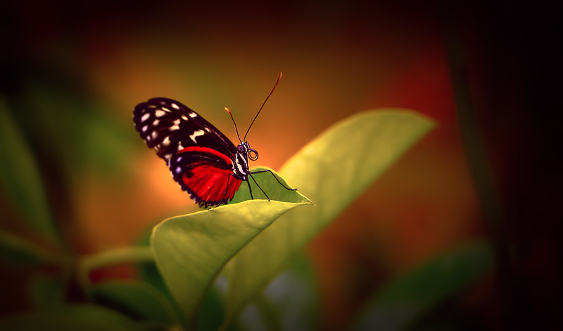 Butterfly-051.jpg