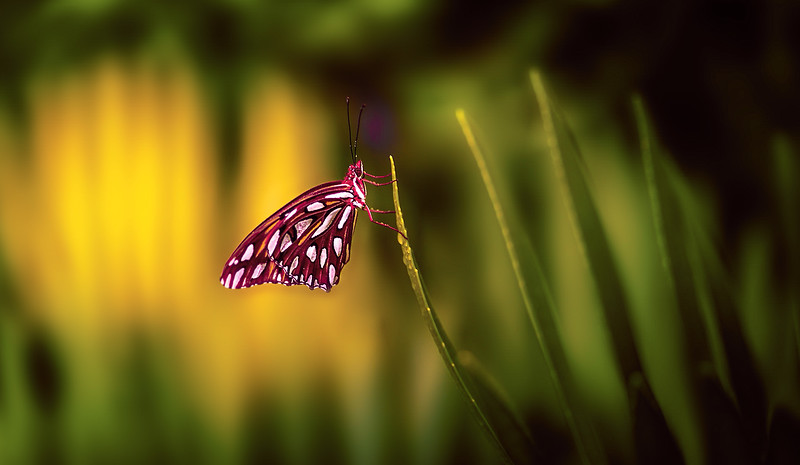 Butterfly-102.jpg