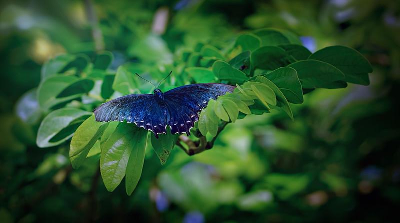 Butterfly-065.jpg