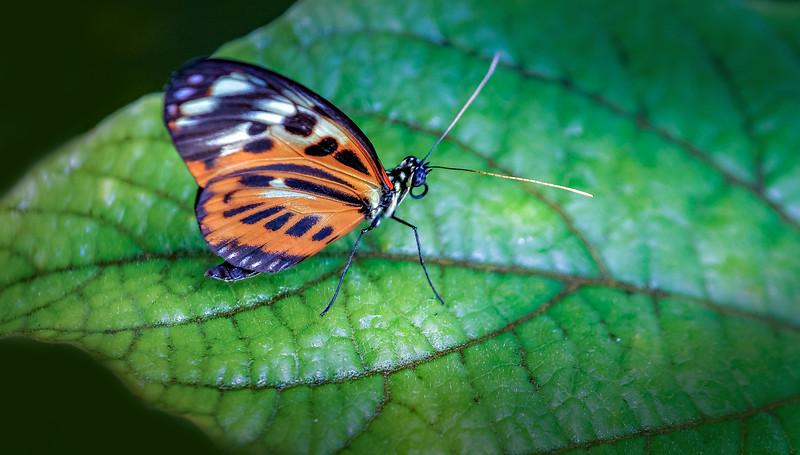 Butterfly-020.jpg
