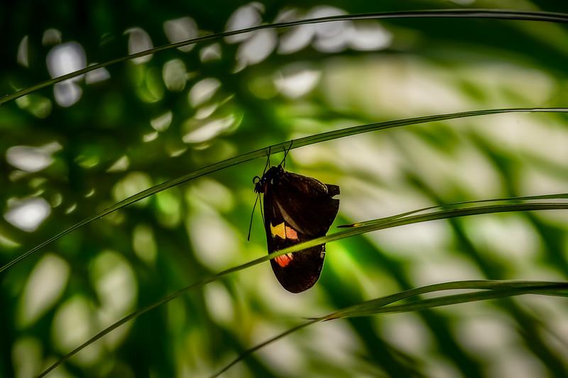 Butterfly-187.jpg