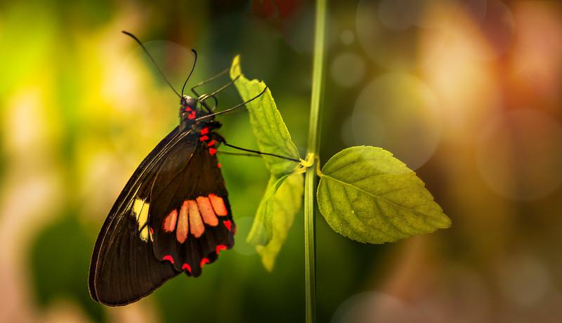 Butterfly-219.jpg