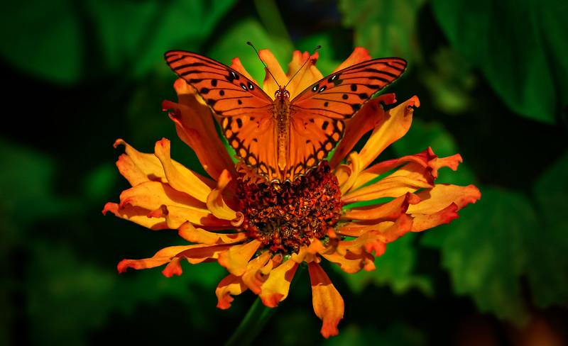 Butterfly-066.jpg