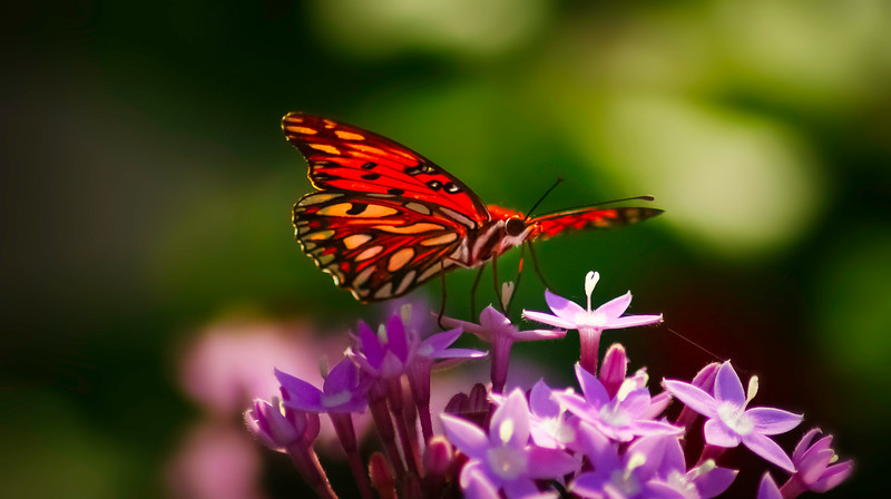 Butterfly-113.jpg