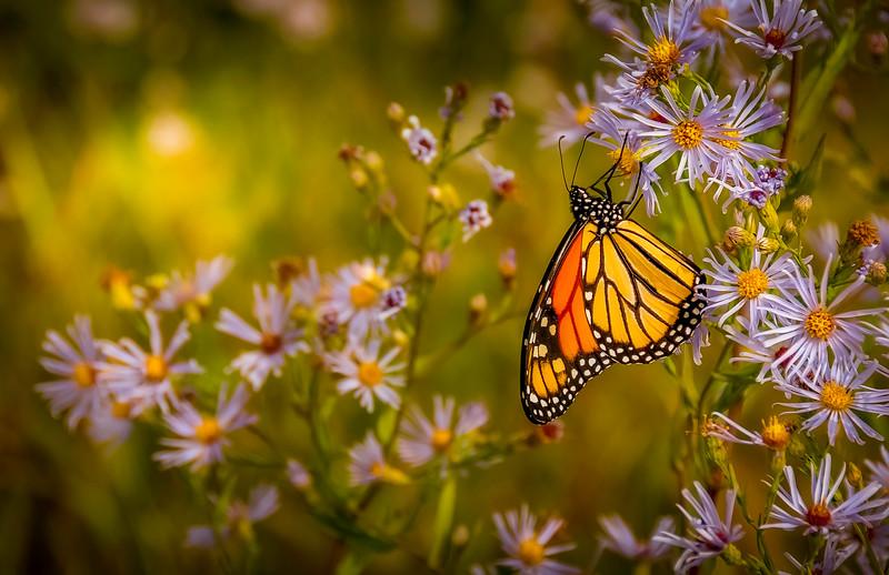 Butterfly-134.jpg