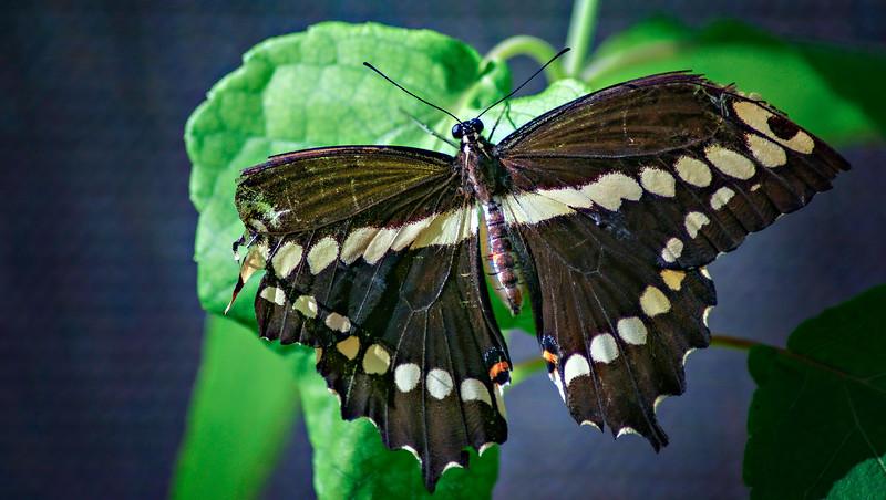 Butterfly-115.jpg