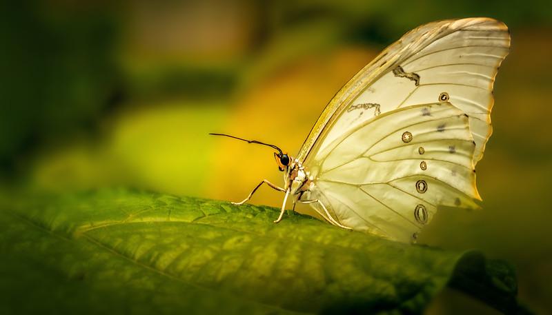Butterfly-054.jpg