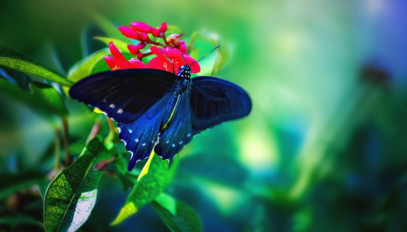 Butterfly-167.jpg