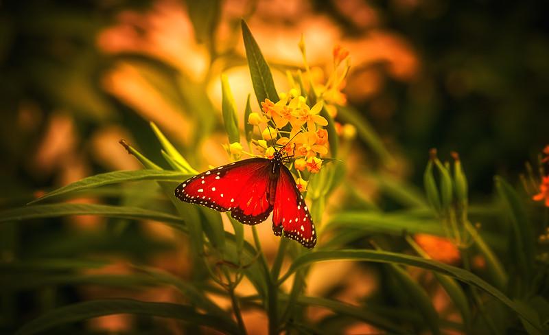 Butterfly-173.jpg