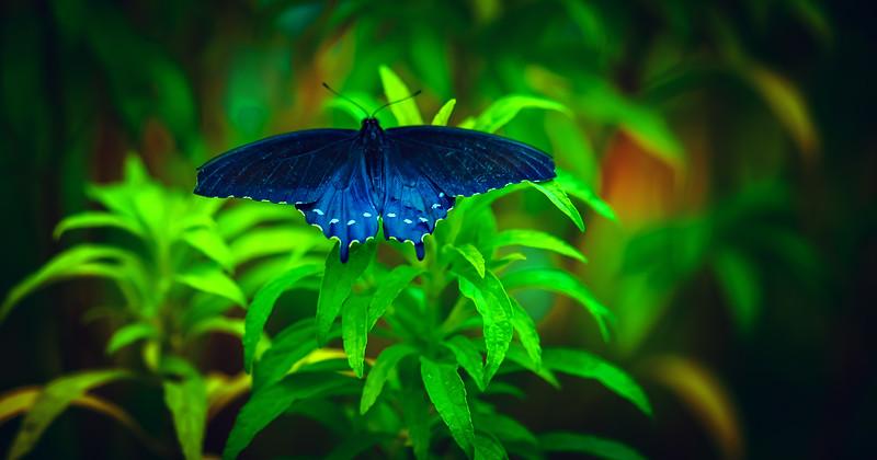 Butterfly-109.jpg