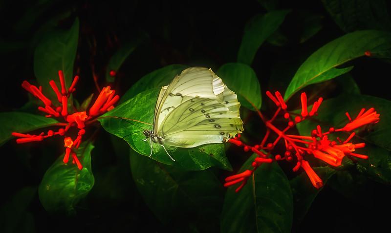 Butterfly-057.jpg