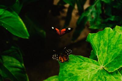 Butterfly exhibit, Lewis Ginter Botanical Garden