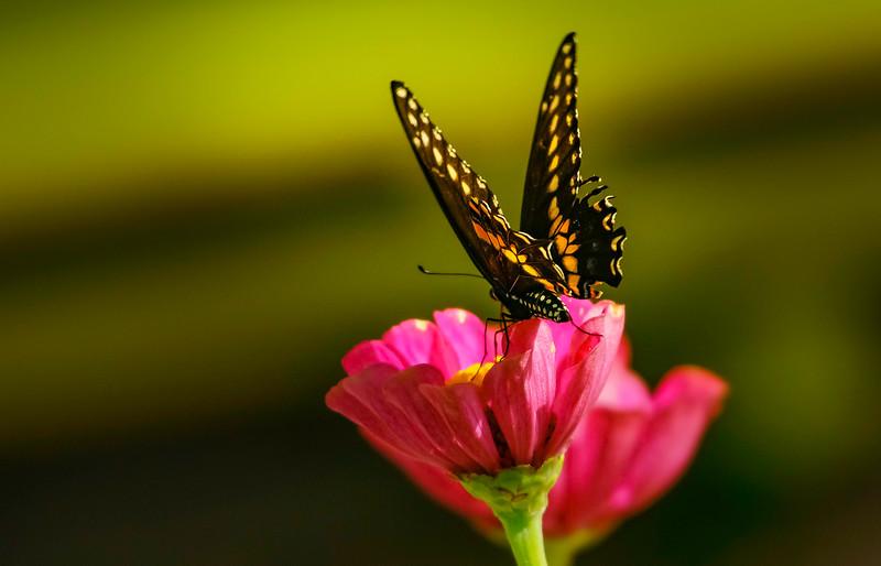 Butterfly-128.jpg