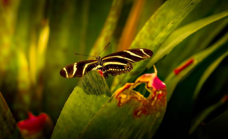 Butterfly-118.jpg
