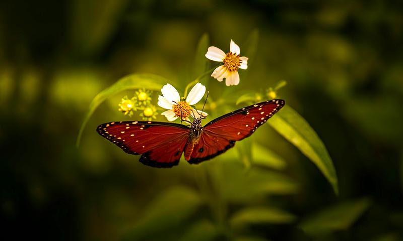 Butterfly-153.jpg