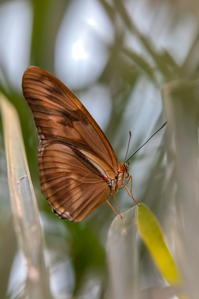 Butterfly 69A3850