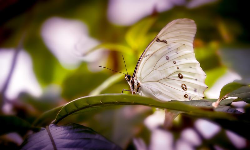 Butterfly-052.jpg