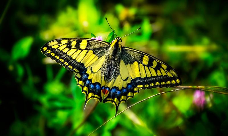 Butterfly-083.jpg