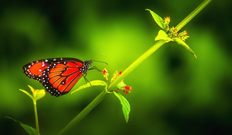 Butterfly-166.jpg