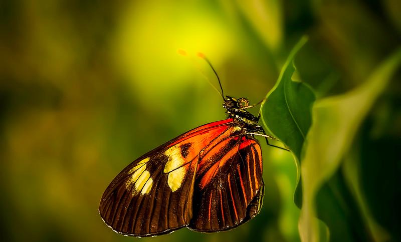 Butterfly-074.jpg