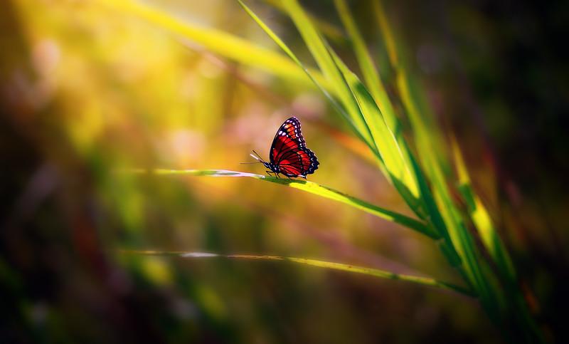 Butterfly-159.jpg