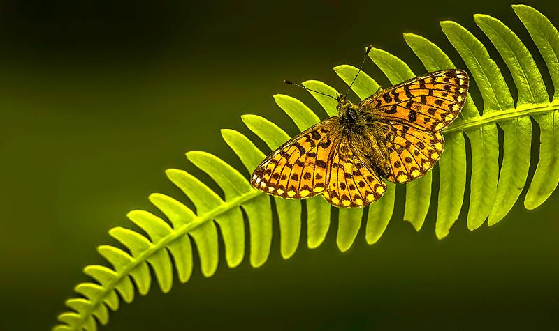 Butterfly-072.jpg