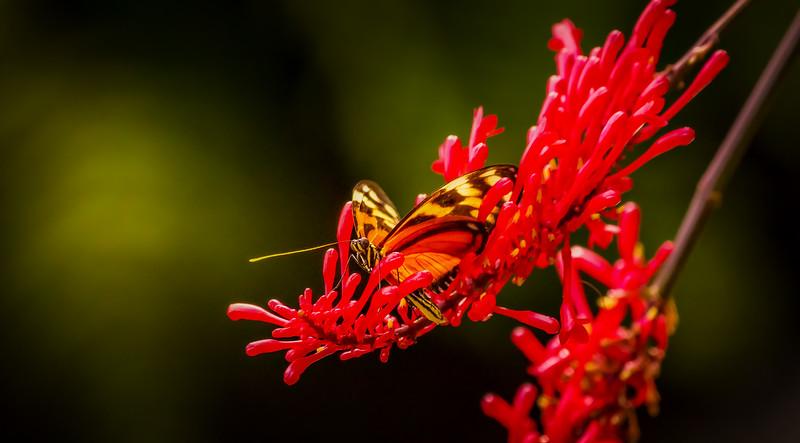 Butterfly-022.jpg