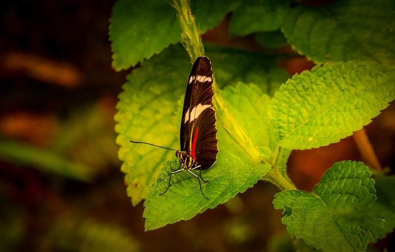 Butterfly-029.jpg