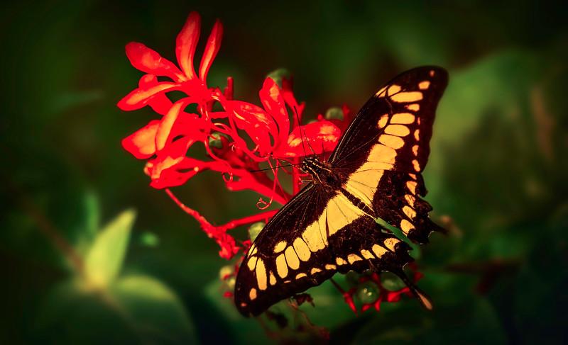 Butterfly-031.jpg