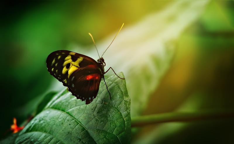 Butterfly-047.jpg