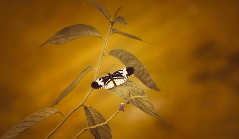 Butterfly-121.jpg