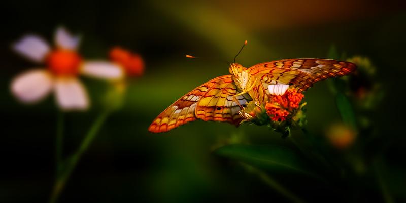 Butterfly-067.jpg