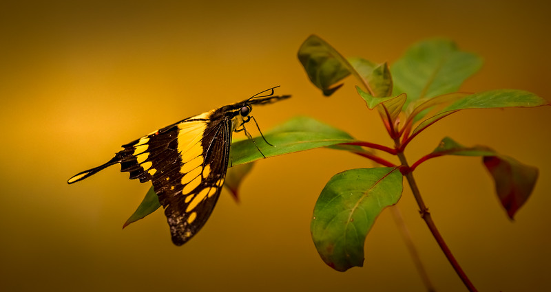 Butterfly-032.jpg