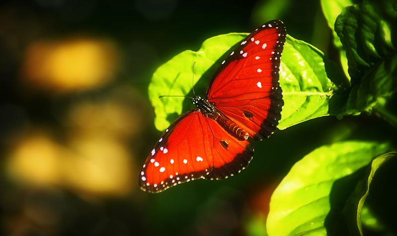 Butterfly-172.jpg