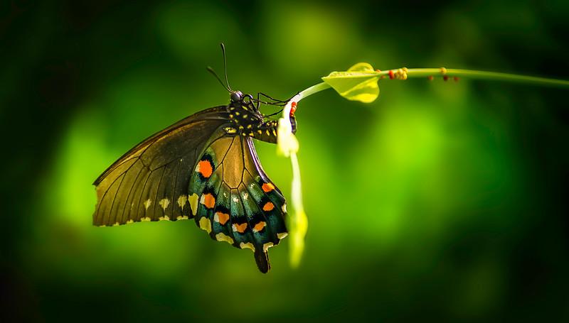 Butterfly-004.jpg