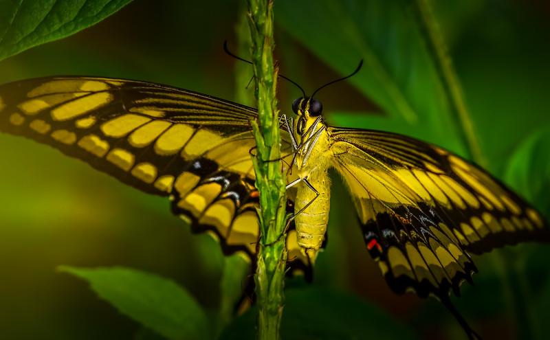 Butterfly-180.jpg