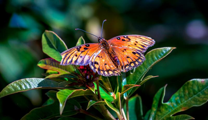 Butterfly-127.jpg