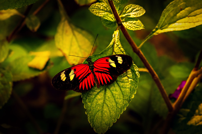 Butterfly-028.jpg