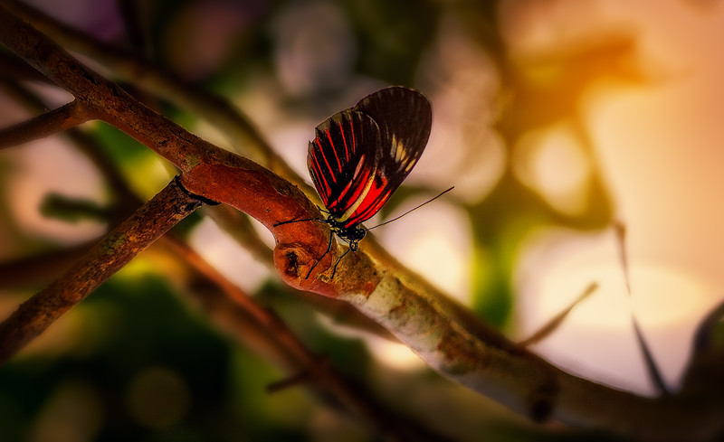 Butterfly-182.jpg