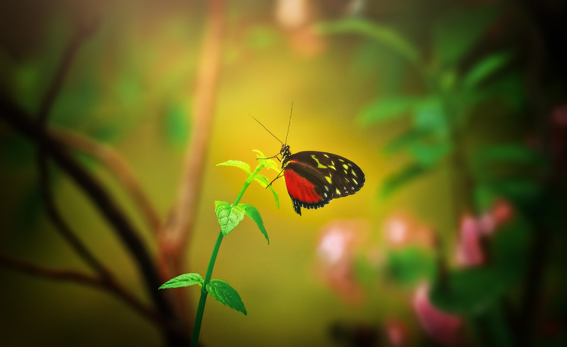 Butterfly-049.jpg