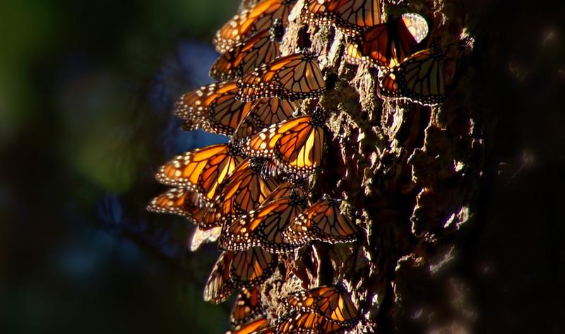 Butterflies-014.jpg