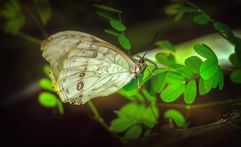 Butterfly-055.jpg