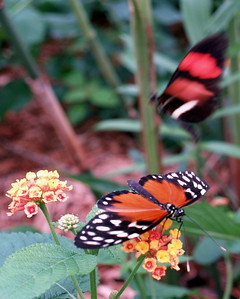 Butterfly House At PIB