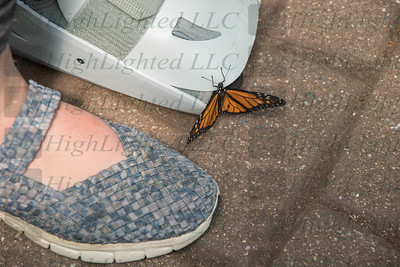 I'm Highlighted LLC - Butterfly-2377