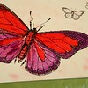 Colored red butterfly postcard.
