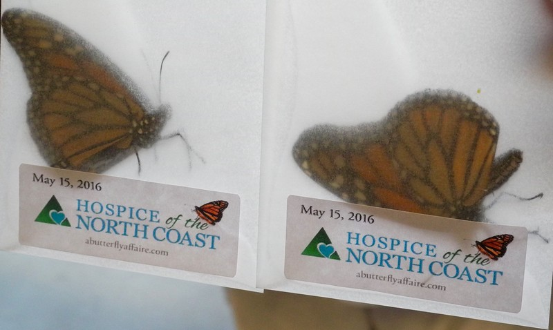 Butterfllies were given to people in a semi-sealed envelope to be released later when the release ceremony started.